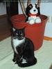 Ebony und der Rot-Kreuz Hund