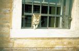 Venice Cat