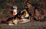 Mangiare ai gatti 4