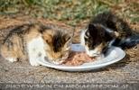 Mangiare ai gatti 8
