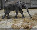 Mutige Katze im Elefantenhaus