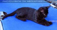 Nissaki Cats 03