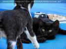Nissaki Cats 05