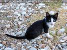 Nissaki Cats 09