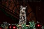 Der schönste Weihnachtsschmuck