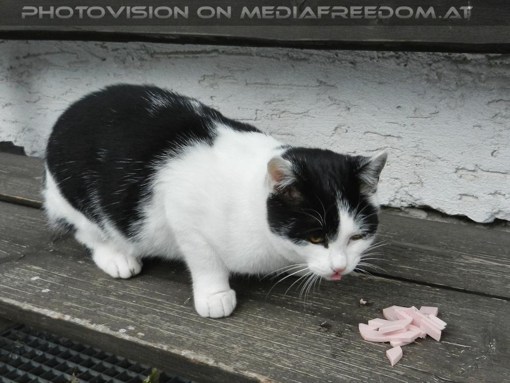 Guten Morgen Katze Puchberg Rax