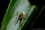 Spinne unbekannter Art