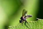 Unbekannte Insektenart