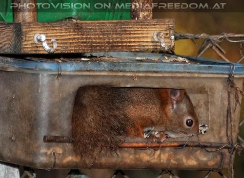 Eichhörnchen 03