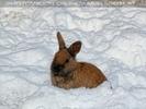 Winterlich 04 am Bauernhof