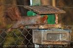 Eichhörnchen 02