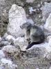 Täglich grüßt das Murmeltier