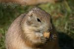 Meine Erdnuss, mein Schatz!