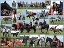 Die große Pferdeshow (Barbara Fiona Simon, Cascadeurs d Autriche, Charly Swoboda, Franz Tursa)