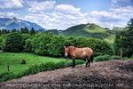 Przewalski-Pferd 2