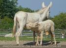 Am Hof 18 - Weiße Esel