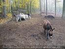 Enger Tierkontakt 03