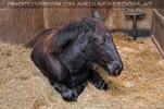 Im Pferdestall 1