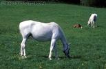 Horse peace