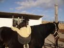 Pferde und Hund