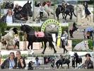Event für Pferde und Hundefreunde