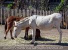 Am Hof 03 - Esel