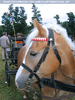 Pferdeschau 09
