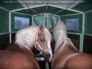 Pferdeschau 10