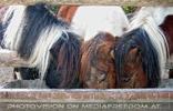 Pony Mahlzeit