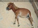 Pony schläft