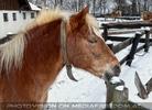 Winterlich 09 am Bauernhof