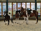 Pferderl reiten