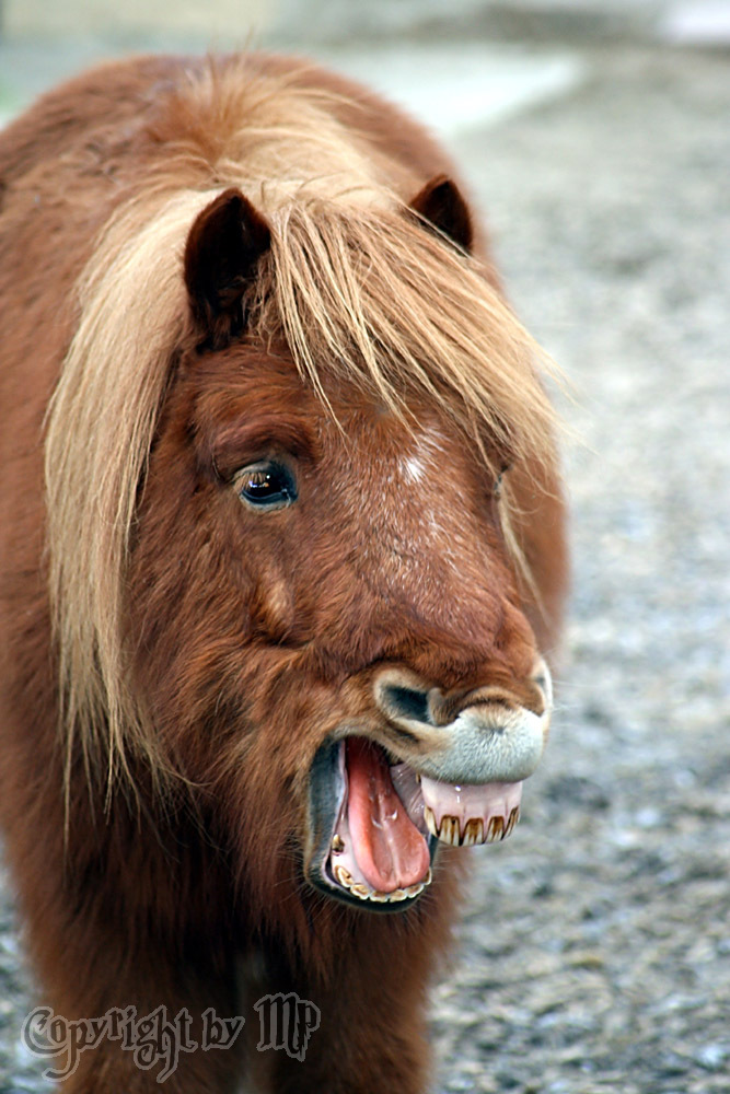 Hässliche Pferde