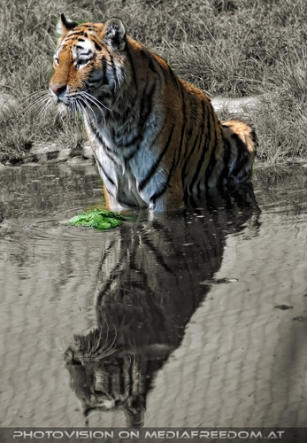 Der grüne Ball 10: Sibirischer Tiger