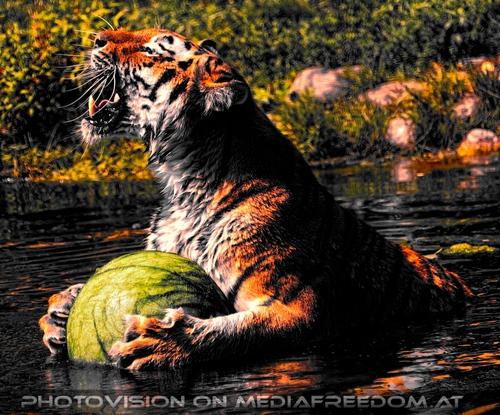 Der grüne Ball 18: Sibirischer Tiger