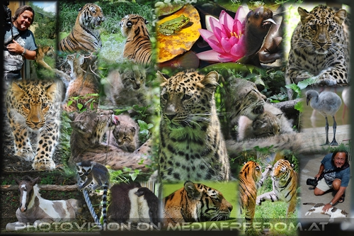 Ida and her new friends: Ida - Amurleopard, Charly Swoboda, Sibirischer Tiger, Katta, Flamingo, Luchs, Pinguin,Mähnenrobbe...