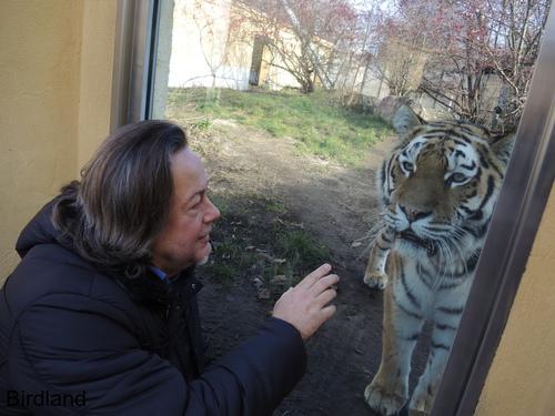 Charly und der Tiger: Karl Swoboda und Tiger