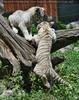 2 Babys spielen