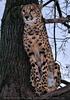 Gepard 7