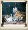 Tigerbabys beim spielen