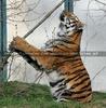 Tiger Tanz #6