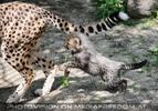 Baby beim Mama ärgern