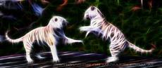 Tiger Tanz Vision
