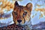 Geparde 3