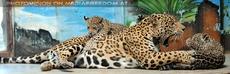Jaguar Mama mit ihren Babys