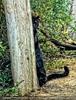 Der versteckte Panther