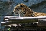 Die Jaguare 02