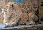 Fast weißer Löwe