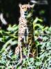 Gepard Vision
