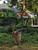 Geparden Fütterung - Im Visir